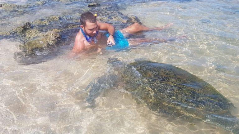 Tortue plage Hikkaduwa Sri Lanka