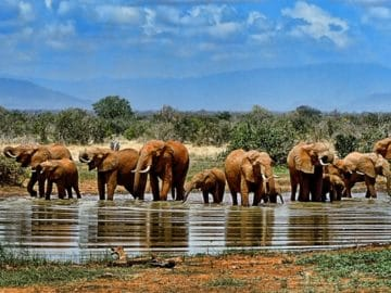 parc national krugger afrique du sud