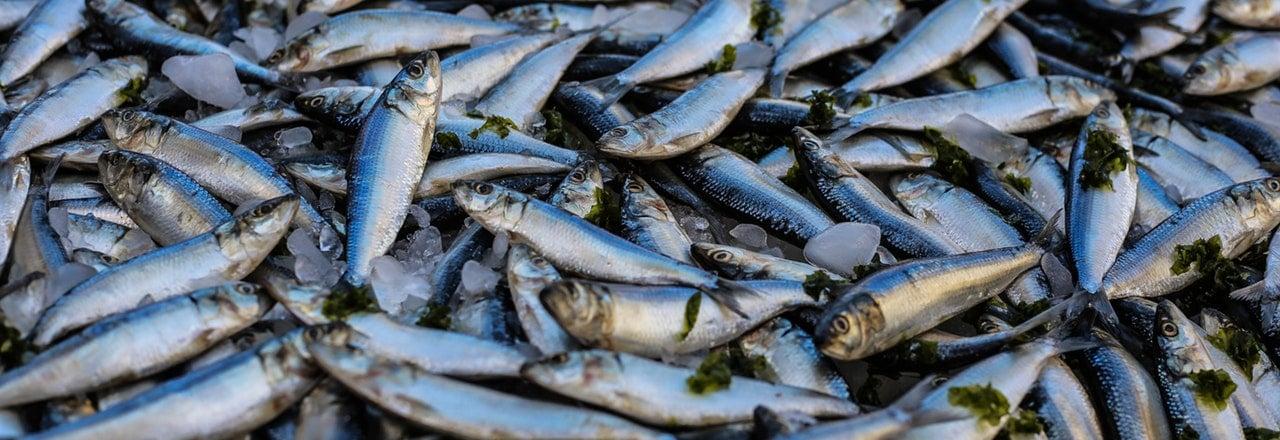 poisson-mort-creme-solaire