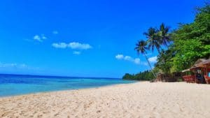 plage-paradisiaque-palmier