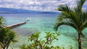 vue-palmier-eau turquoise