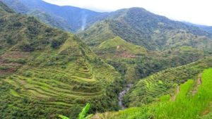 riziere-philippines