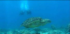 tortue-fond de mer
