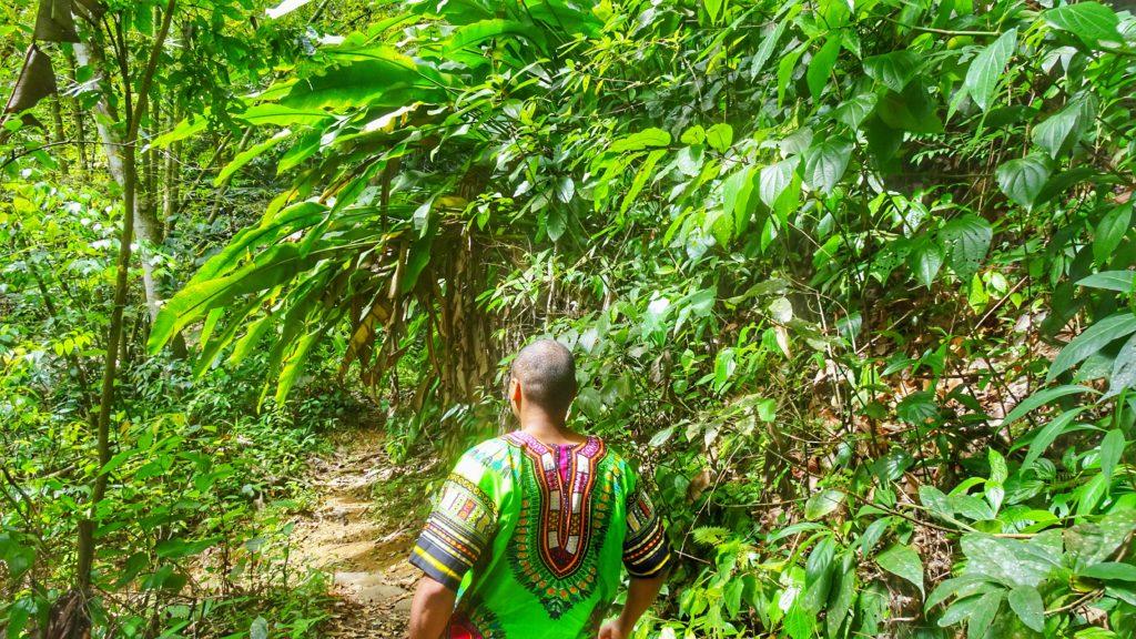 forêt tropicale verdoyante lors de notre randonnée menant aux latille falls