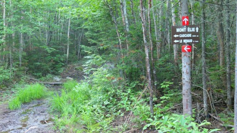 intersection du mont Menaud et du mont Elie dans la forêt