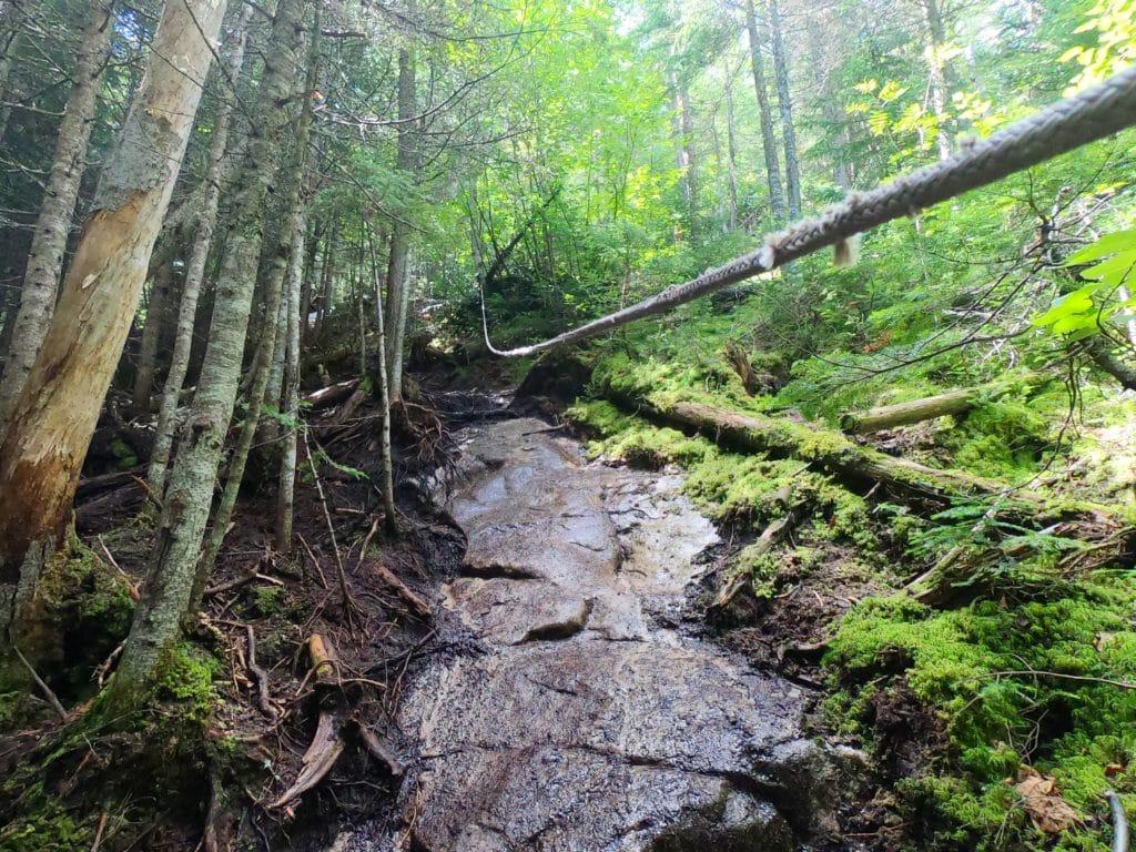 forêt sauvage du Mont Menaud