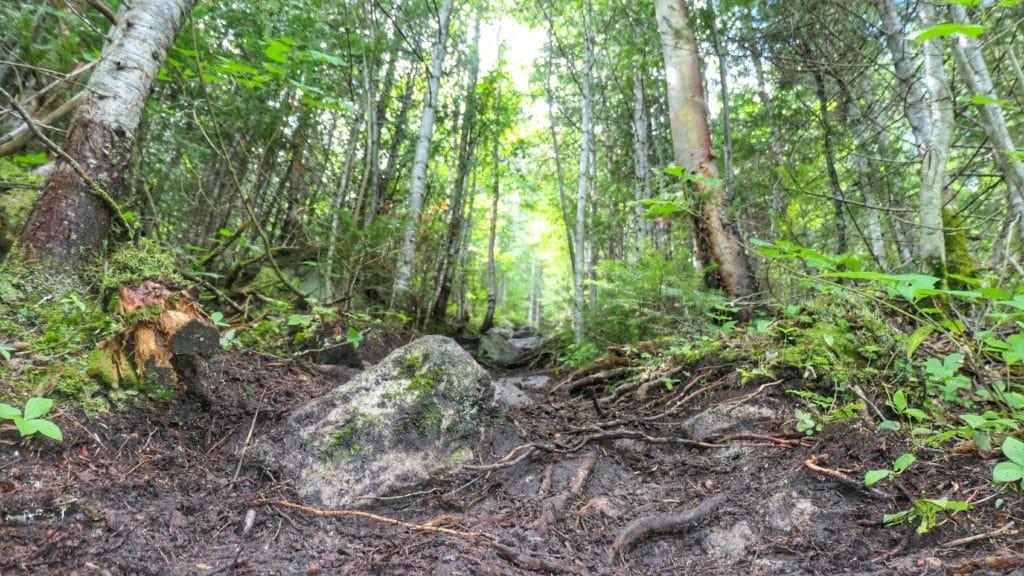 Terrain de randonnée dans la forêt du mont des Morios très technique avec beaucoup de racines et de pierres