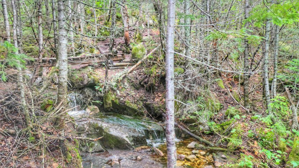 Petit cours d'eau dans la forêt du mont Morios