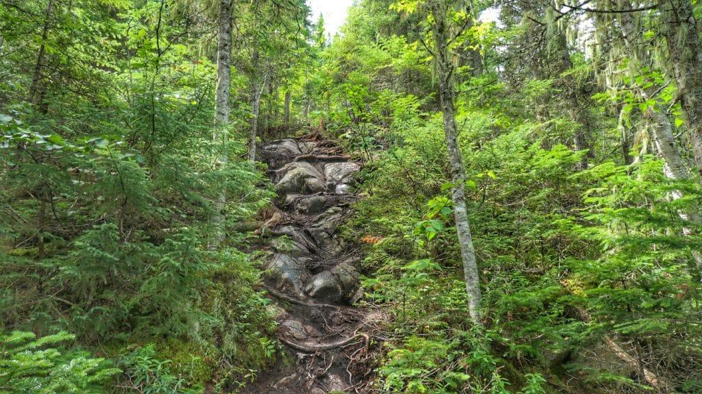 Chemin de randonnée technique et abrupte dans la forêt du mont des Morios