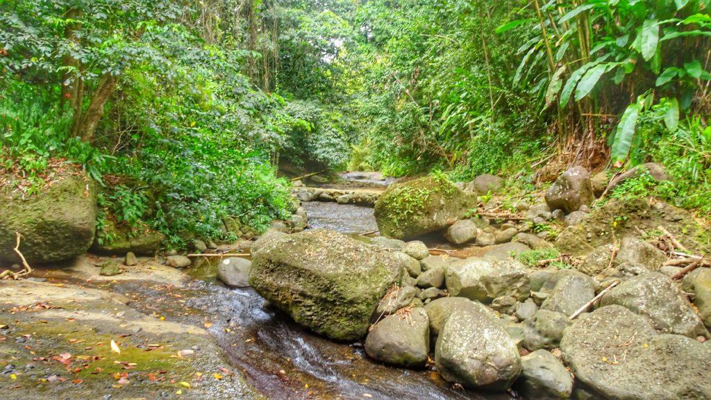 forêt tropicale traversée par un cours d'eau sur l'île de Sainte Lucie