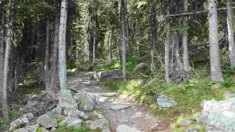sentier de randonnée du mont fairview côté forêt