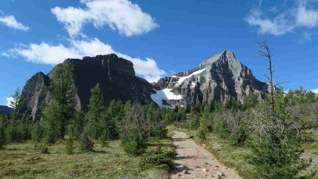 vue sur une montagne enneigé avec des arbres en arrière plan