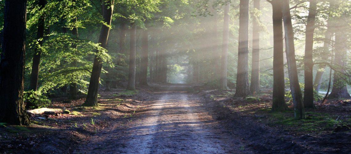 Ardennes-belge-nature-forêt
