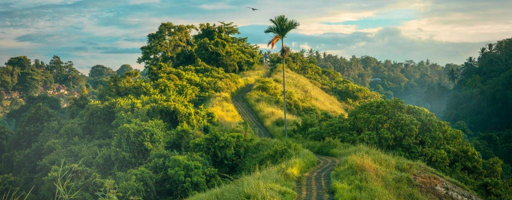 accueil-partir-loin-voyage-paysage-vert