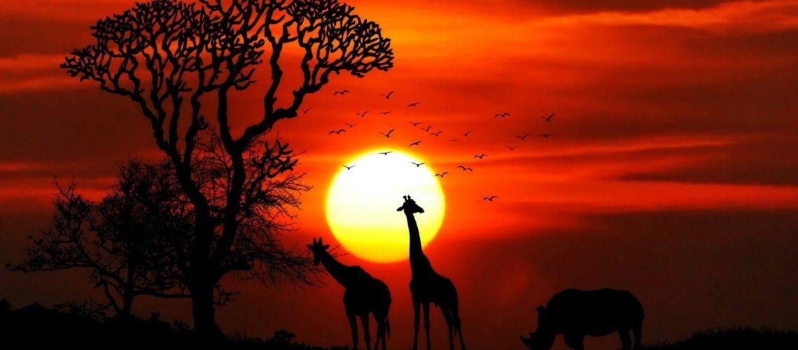 couché de soleil afrique du sud girafe
