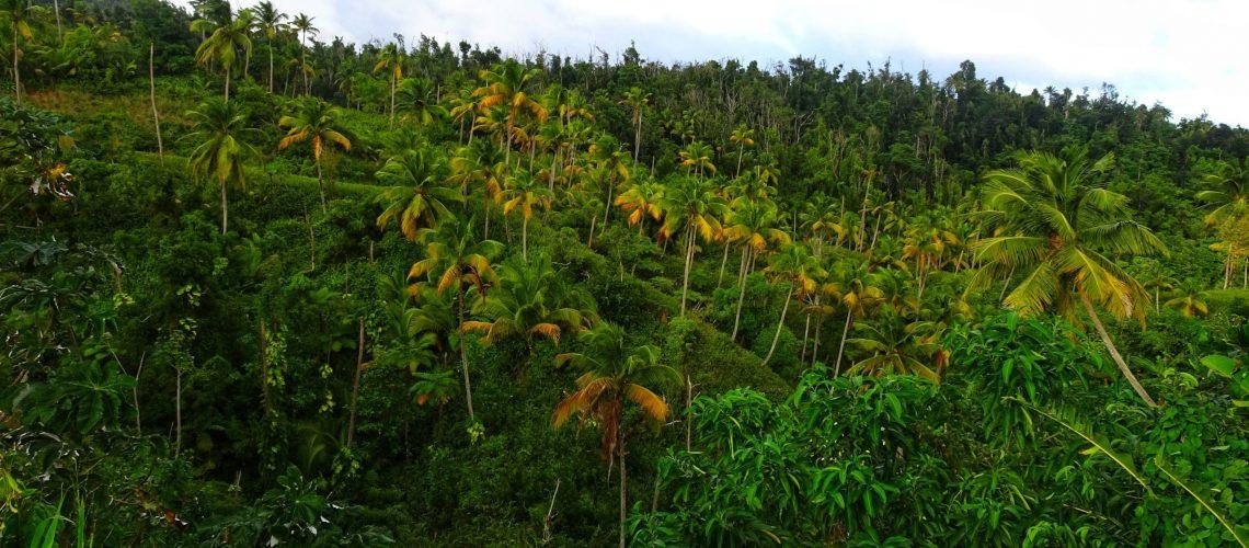 palmiers-dominique-nature