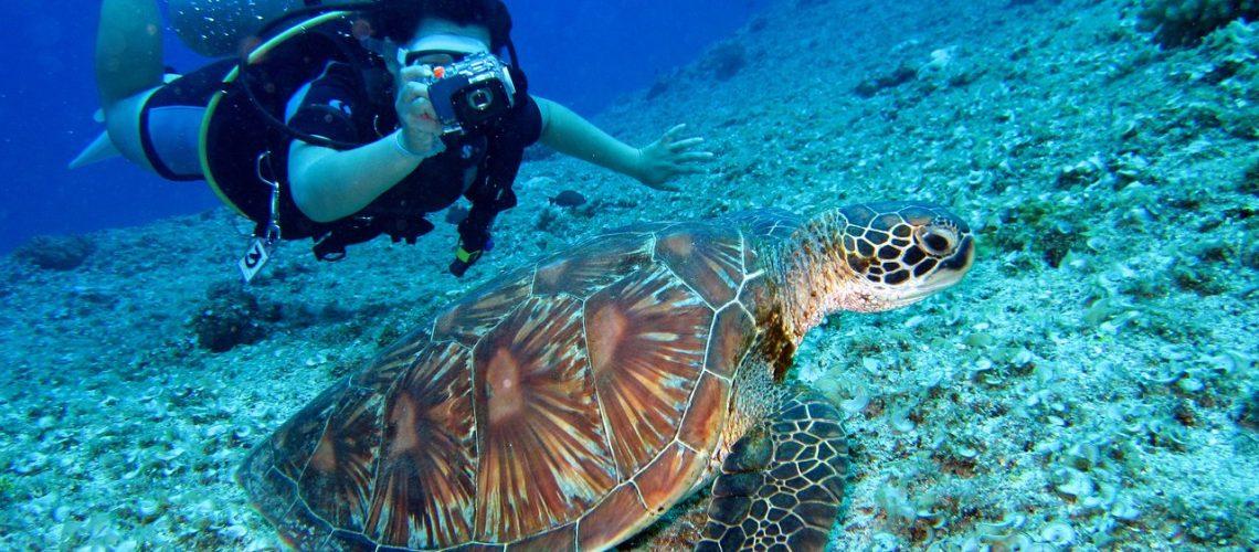 tortue-plongée-sous-marine-plongeur