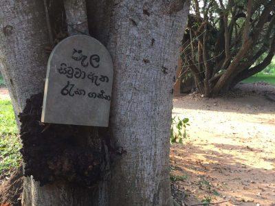 vipassana-meditation-anuradhapura-sri-lanka (2)